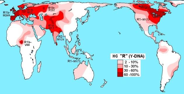 Haplogroup_R_(Y-DNA) (1)